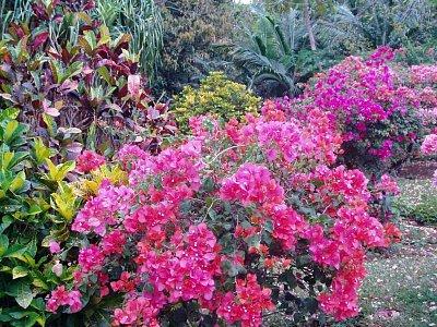 Pestrost mauritijské flóry