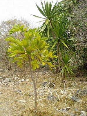 Vegetace ostrova Ile Aux Aigrettes