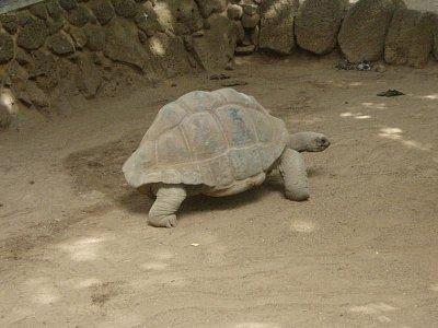Obří želva v parku Casela