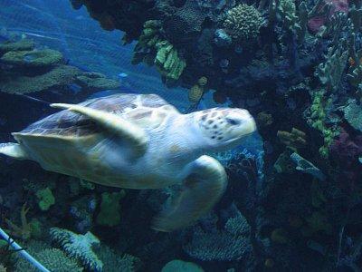 Peking - akvárium v ZOO (nahrál: admin)