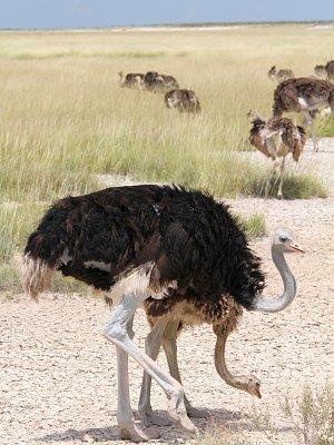Namibie po vlastní ose