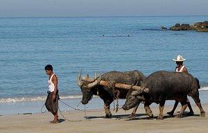 Potřetí v Barmě - znovu na NGAPALI BEACH