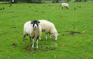 Víkend v Národním parku Peak District (Anglie) – ráj turistiky a cykloturistiky...