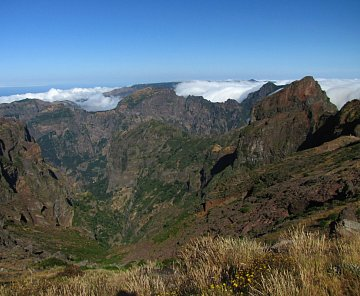 Madeira 2010 - hřebenovka
