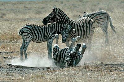 Národní park Etosha nabízí obdivuhodnou podívanou (nahrál: Martina Svobodova)